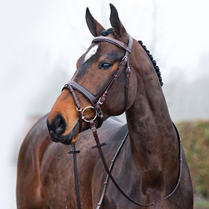 Horse Category